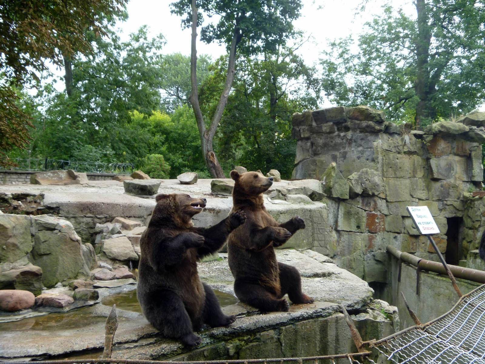Животные в Калининградском зоопарке
