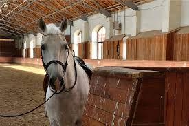 Лошади в Черняховске